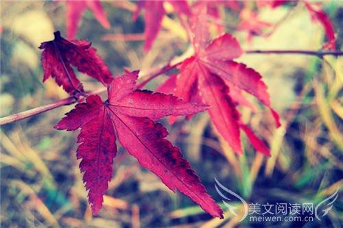 四季贵州·椿棠府 回家就是度假的开始